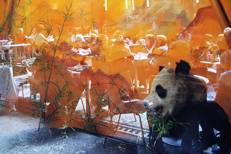 Giant panda at Natural History Museum Café. <br />UNITED KINGDOM, London | 2011
