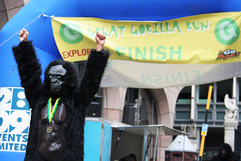 A participant in the Great Gorilla Run, a 7 km fun run to raise funds for a conservation charity. There have been 700 <br />runners in 2010's event, which is the same number of gorillas left living in the wild. Photo for The Gorilla Organization. <br />UNITED KINGDOM, London | 2010