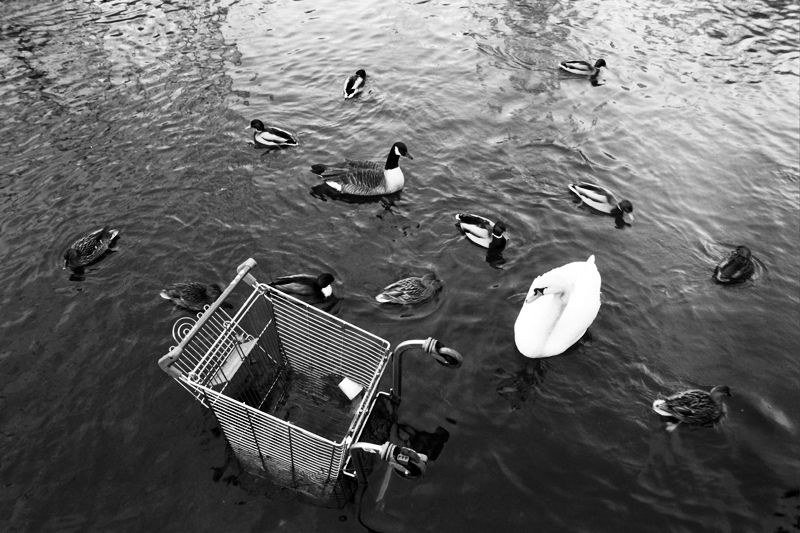 Supermarket trolleys litter the Kennet river.<br />UNITED KINGDOM, Reading | 2010